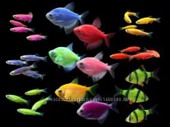 Рыбки глo ассорти